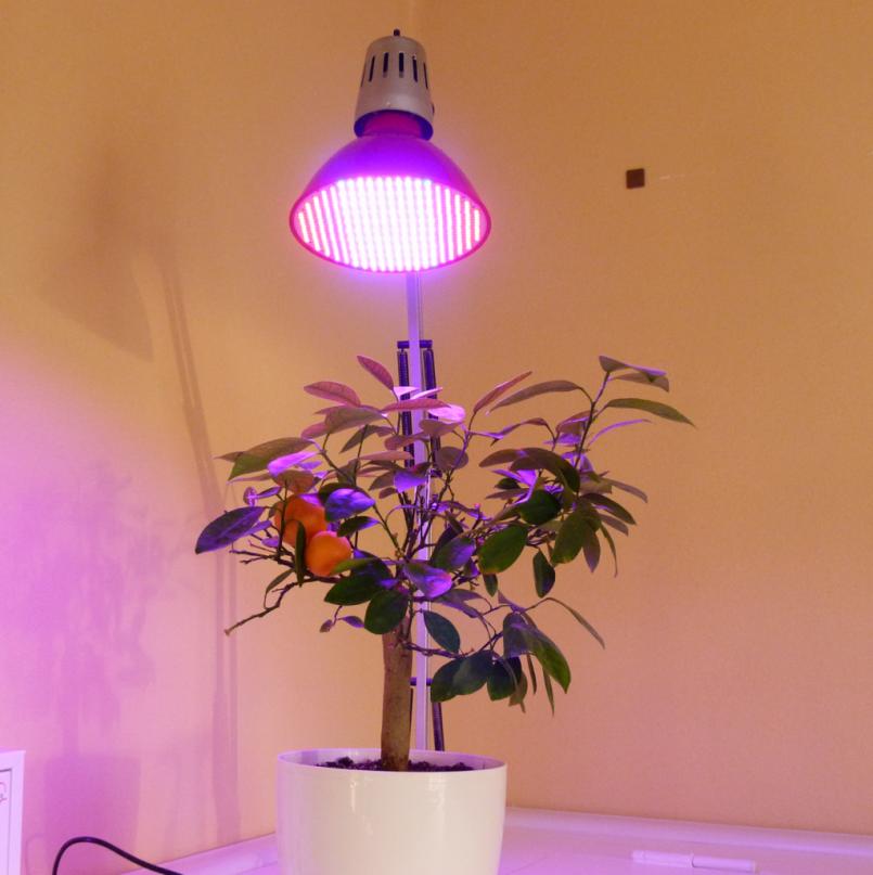Какие лампы для растений лучше выбрать: 135 фото искусственного освещения для растений в теплице